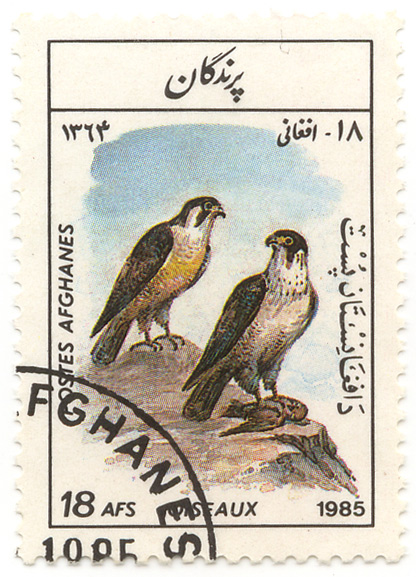Oiseaux - Postes Afghanes