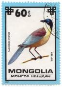 Mongolia - моигол шуудаи - Cyanopica cyanus - Air Mail